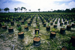 Malaysia is world's largest exporter of palm oil.